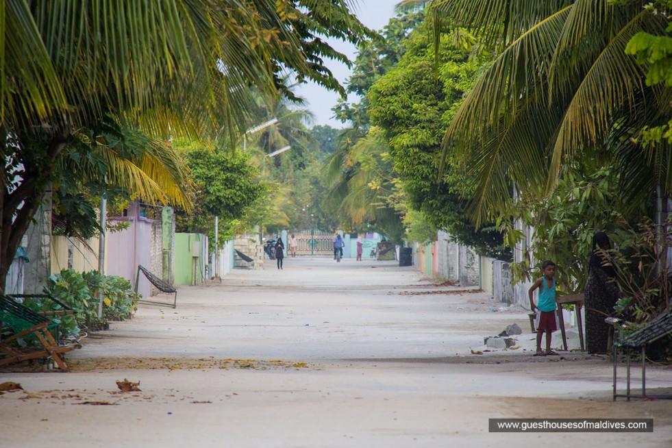 Local Island Excursions