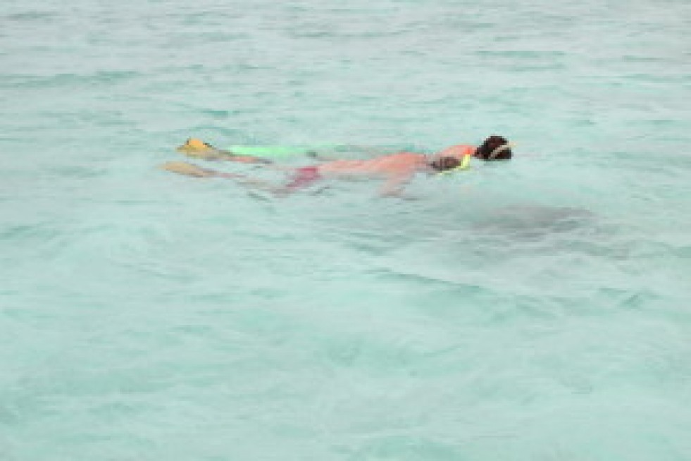 snorkel 6